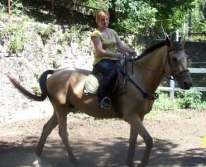 Felnőtt lovaglás oktatás minden szinten
