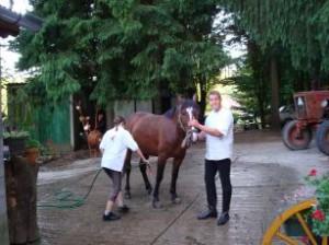 Ló ápolása